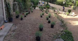 Réalisation aménagement jardin 6