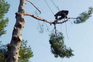 Elagage, Abattage arbre et Débroussaillage