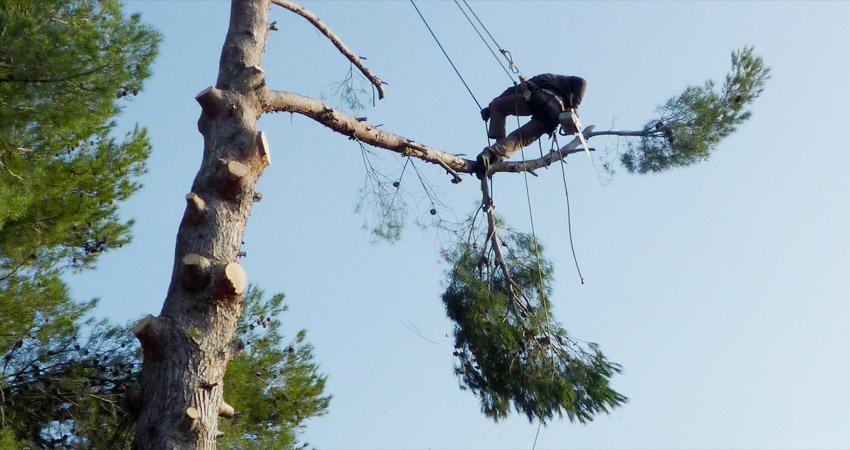 Abattage d'arbre et élagage, les Jardins de Cabrières