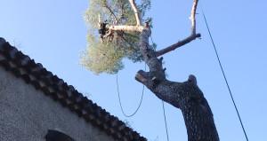 Réalisation élagage et abattage arbre 1