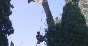 Réalisation élagage et abattage arbre 2