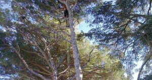 Réalisation élagage et abattage arbre 4