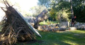 Réalisation élagage et abattage arbre 5