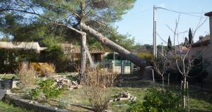 Réalisation élagage et abattage arbre 6