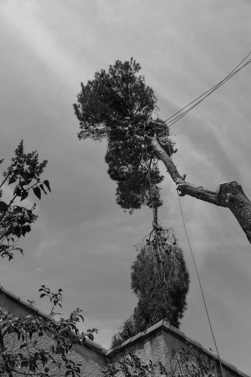 Abattage arbre aix en provence for Le jardin des 5 sens aix en provence